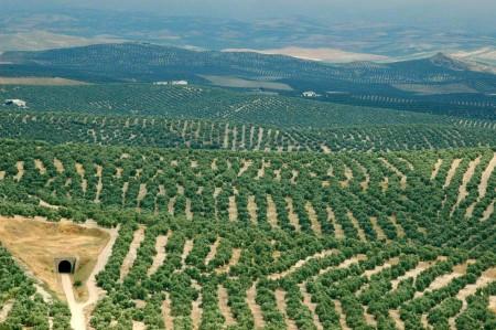 olivospeke