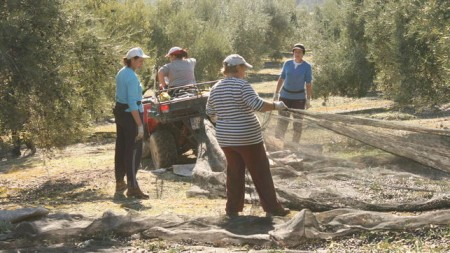 Mujeres-rurales-trabajando-recogida-aceituna_EDIIMA20141014_1084_4